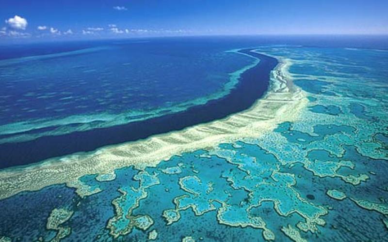 Muere el 35% del coral de la Gran Barrera de Australia