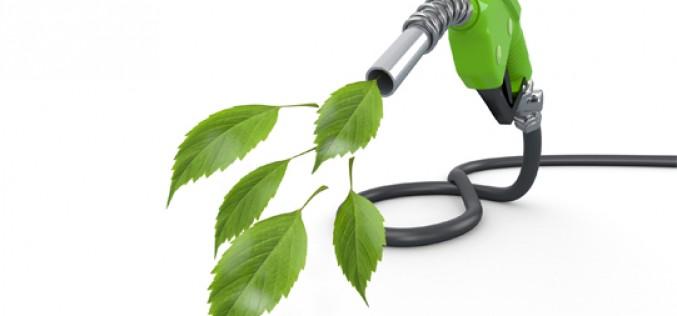 Tabaco, un nuevo biocombustible