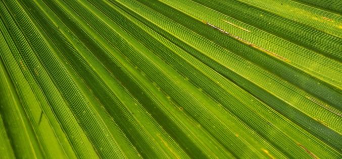 Descubre por qué el aceite de palma daña el medio ambiente