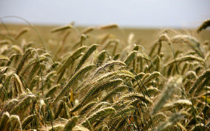 México: Presentan distintivo Empresa Agrícola Responsable