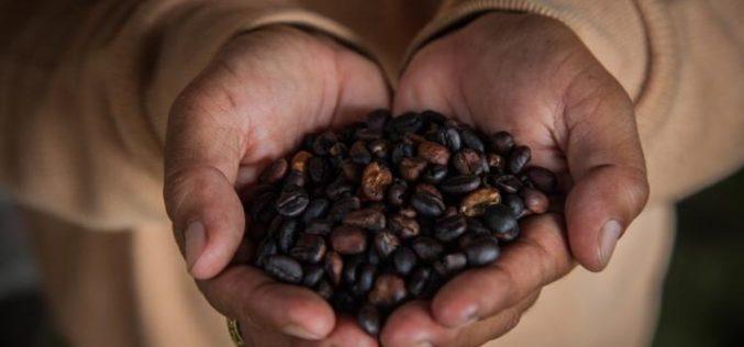 El nuevo biocombustible a base de café que usará el transporte público en Londres
