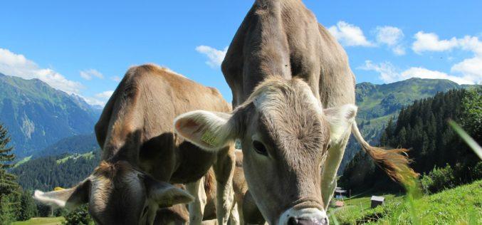 Constituyen la mesa Argentina de Carne Sustentable