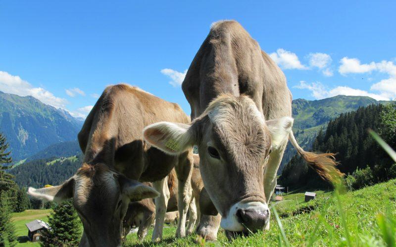 Industria lechera lanza su propia agenda de sustentabilidad para los próximos años