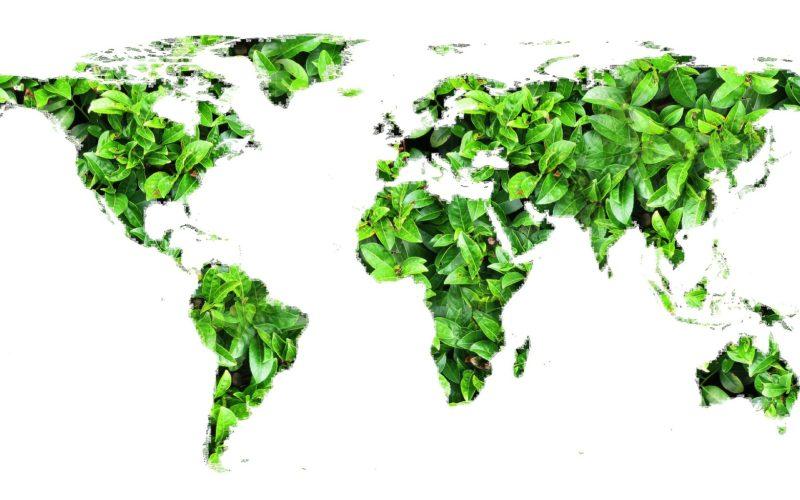 Comunicar el desempeño ambiental con transparencia