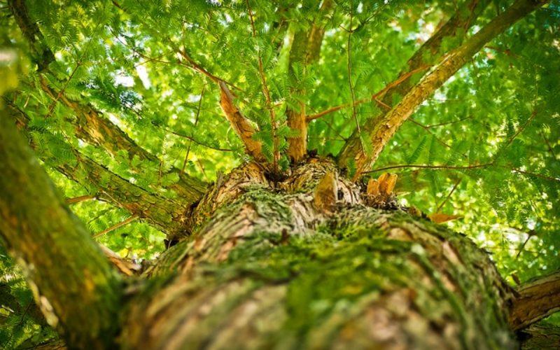 Los bosques vírgenes del Planeta absorben gran parte del CO2 humano