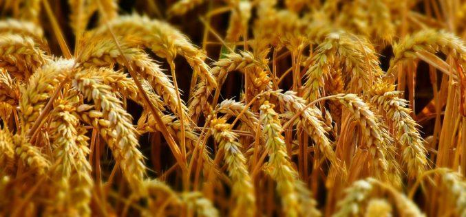 ¿Cómo mejorar la seguridad alimentaria en Colombia?