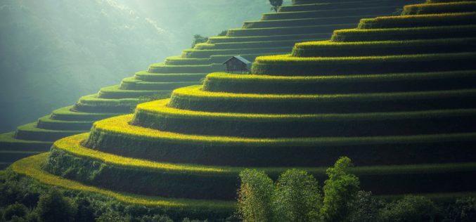Cómo incorporar los ODS a la agricultura: caso Monsanto