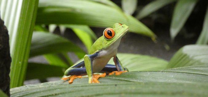 Costa Rica, en camino de ser el máximo líder en la lucha contra el cambio climático