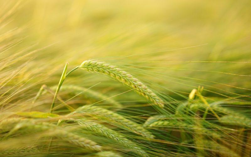 La agricultura orgánica como estrategia de RSE