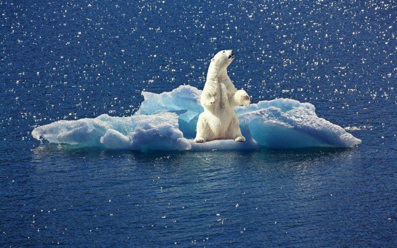 Nobel de economía a la lucha contra el cambio climático