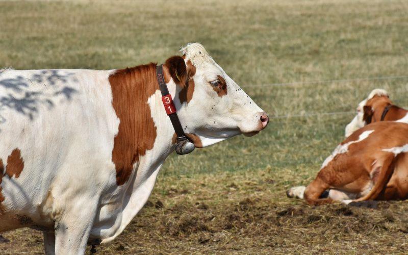 Sudamérica se implica para reducir el impacto medioambiental de la ganadería
