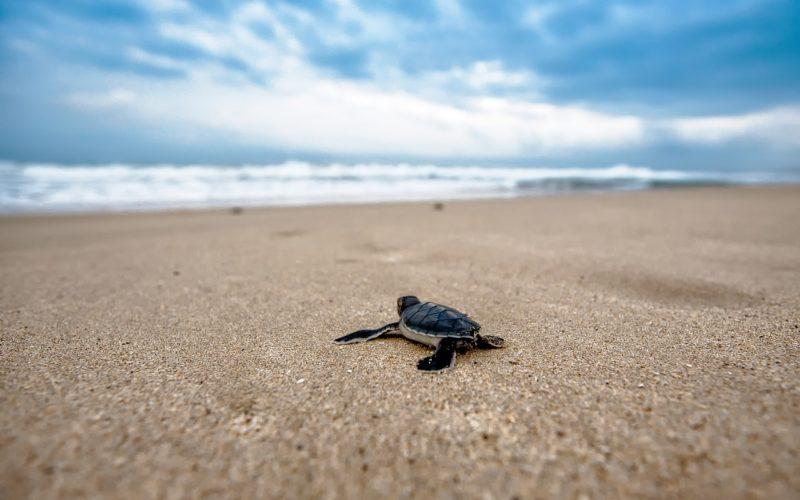 Un millón de especies, amenazadas de extinción a un ritmo sin precedentes