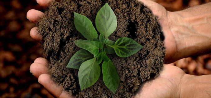 50 formas de llevar una vida más sustentable