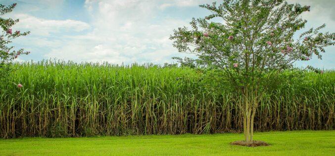 Honduras: Agroindustria azucarera es ejemplo a seguir en materia de sostenibilidad