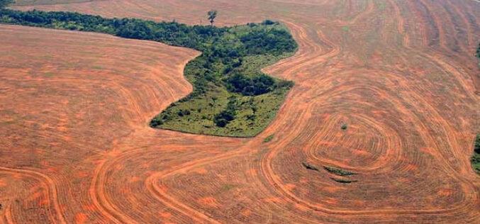 Buscan que término «ecocidio» sea reconocido por la CPI como crimen internacional: se trata de «ilícitos» que destruyan el medioambiente