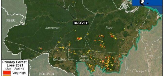 El Amazonas ya no es el pulmón del planeta: lleva una década emitiendo más CO2 del que absorbe