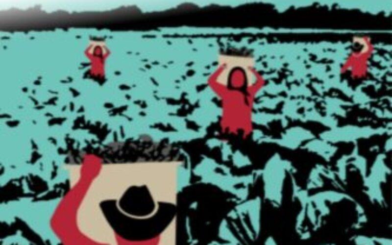 """México: Para proteger los derechos humanos de las y los trabajadores agrícolas migrantes surge proyecto """"Periplo"""""""